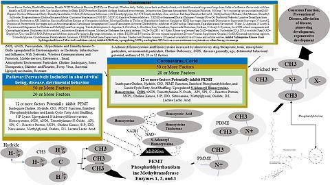 Corona Vector Clinical Card.jpg