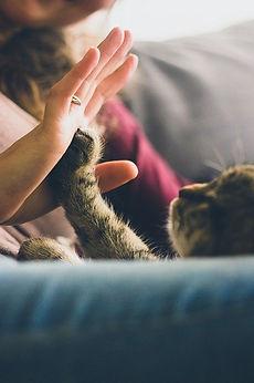 cat-691175_640.jpg