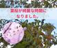 桜の綺麗は、花だけじゃないんですね!