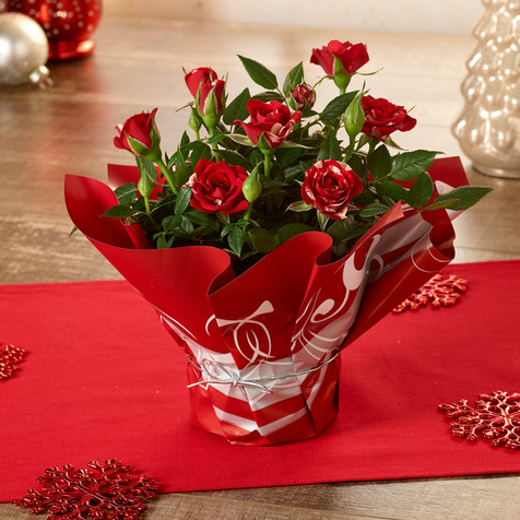 4inRoses_Red_Christmas1_WEB.jpg