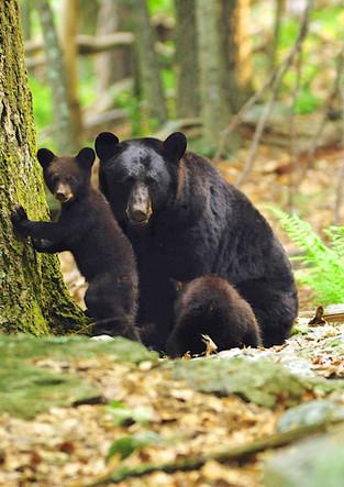 Mom & Bear Cub Culver Lake.jpg