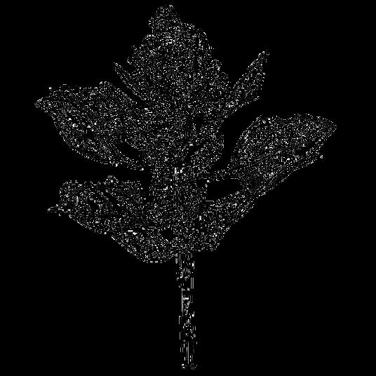 planta-q.png