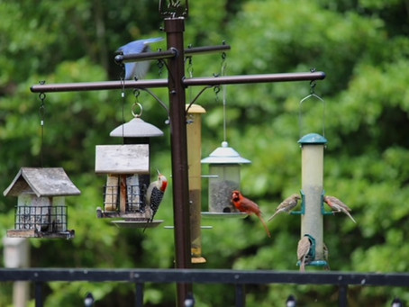 BIRDS . . . and BURDENS