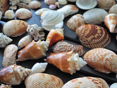 4 TOP REASONS SANIBEL ISLAND IS MY FAVORITE BEACH DESTINATION