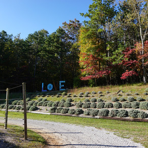 An Herb Farm and a Dinner Theatre - 2 Wytheville, Virginia Surprises