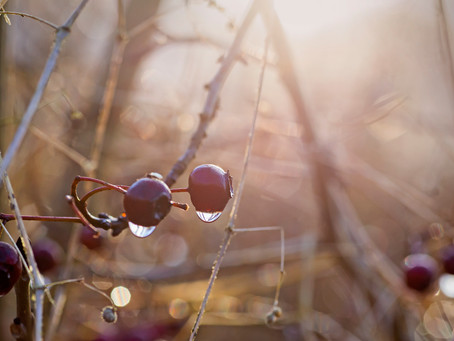 Week 16 #MijnMuzeBos (Winter)