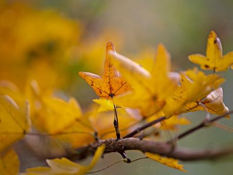 Week 8 #Mijnmuzebos (Herfst)
