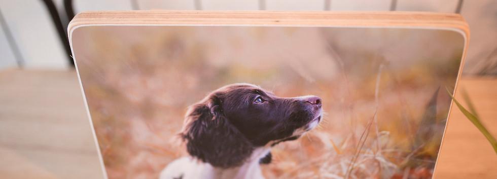 HoutenFotoblock_Pup_WEB.jpg
