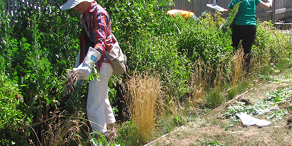 Maintaining Plants in Green Stormwater Infrastructure