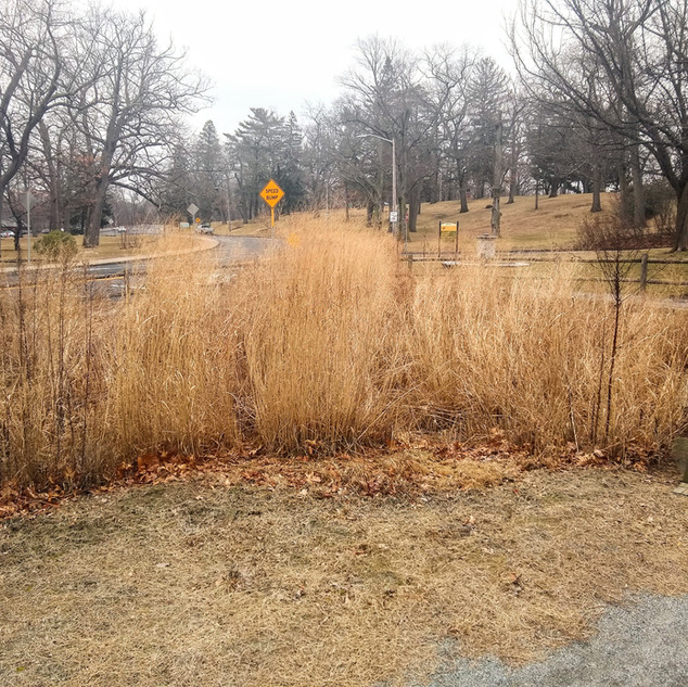 Bioretention - Raingarden