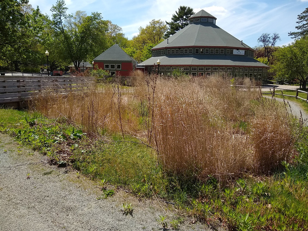 BMP-3B // Another example of a rain garden in Roger Williams Park. Image Credit: Ryan Kopp.