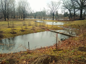 Infiltration Basin (Site 34)