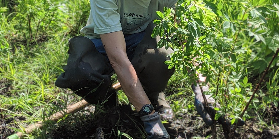 Volunteer Shoreline Planting