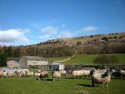 sheep 2 free