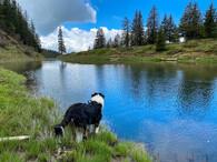 Bodhi beim Fleschsee