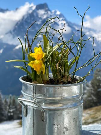 Frühlings Blume