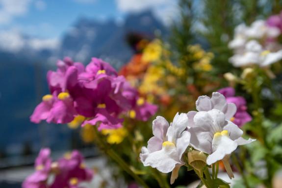 Tisch-Blumen