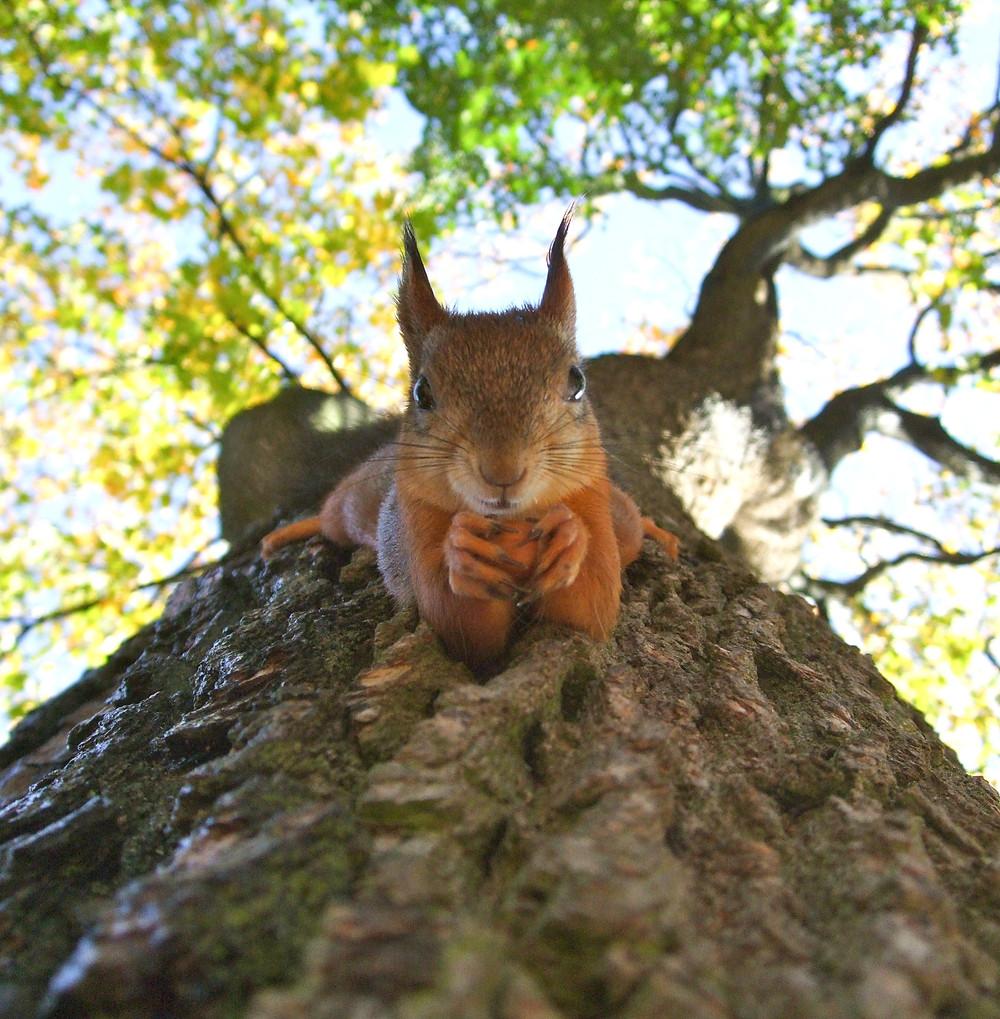 Ecureuil, vue spéciale