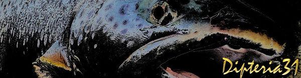 Dipterbandeau dipteriafree.jpga31, moniteur guide de pêche
