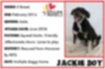 JACKIE BOY.JPG