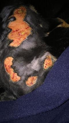 Biscooti-burns-IMG-8655.jpg
