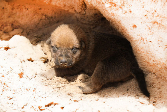 Shirley-the-pup-v2-1.jpg