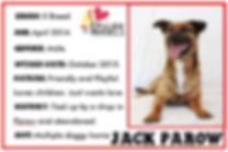 JACK PAROW.JPG