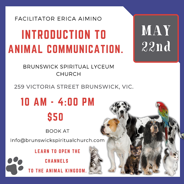 Animal Communication 1 Day Workshop