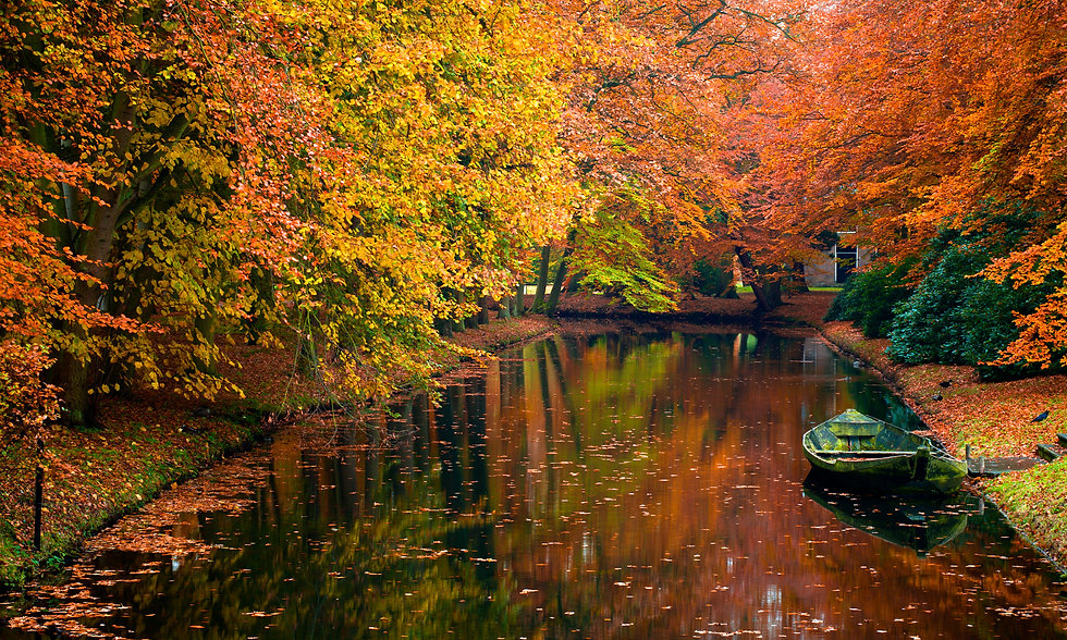 Yorkshire Autumn (2).jpeg