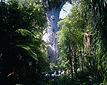 Tane-Mahuta---Waipoua-Foresta.jpg