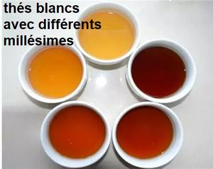 thés blancs millésimes