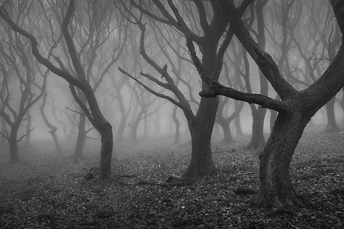 Misty St Mary's Vale