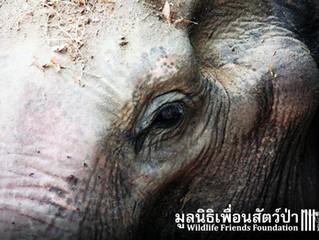 Elephant Hospital in Petchaburi
