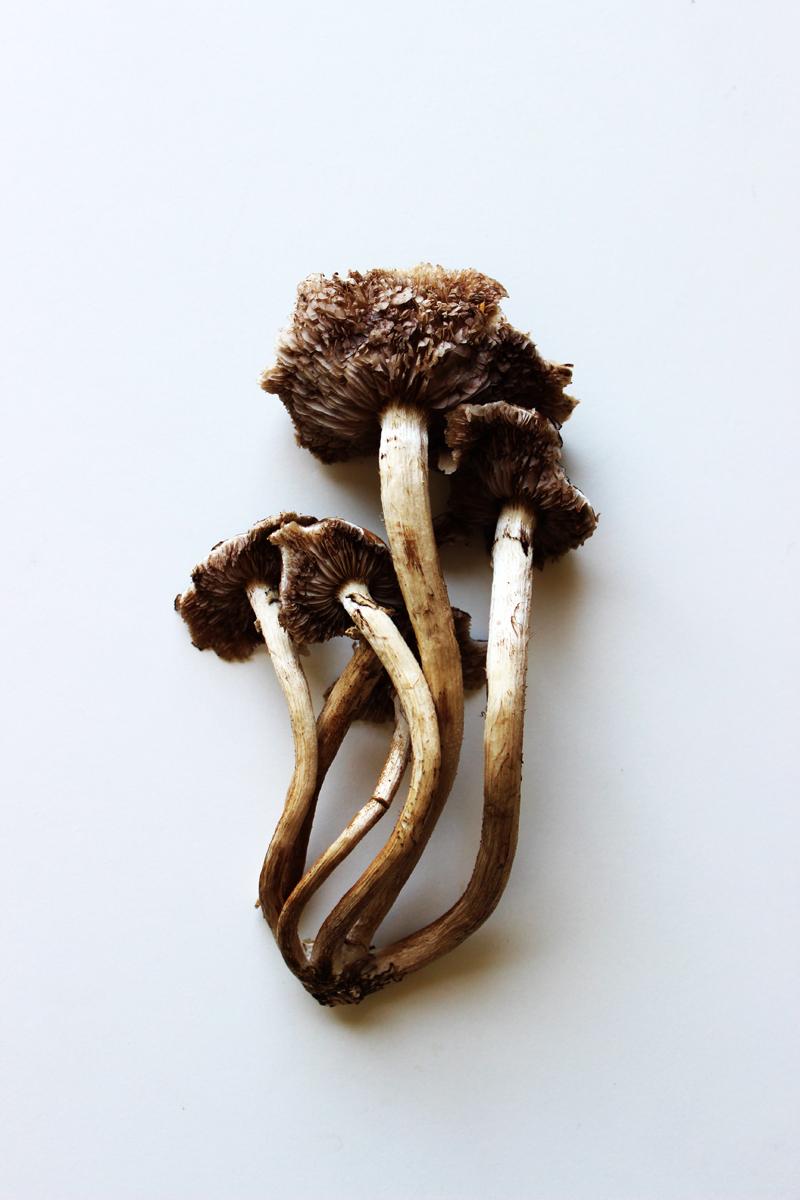 mushroom unknown