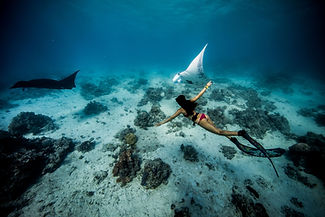 Swim with the Giant Manta Rays