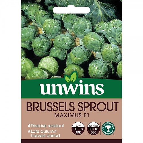 Unwins Brussels Sprout Maximus F1 - Approx 15 Seeds