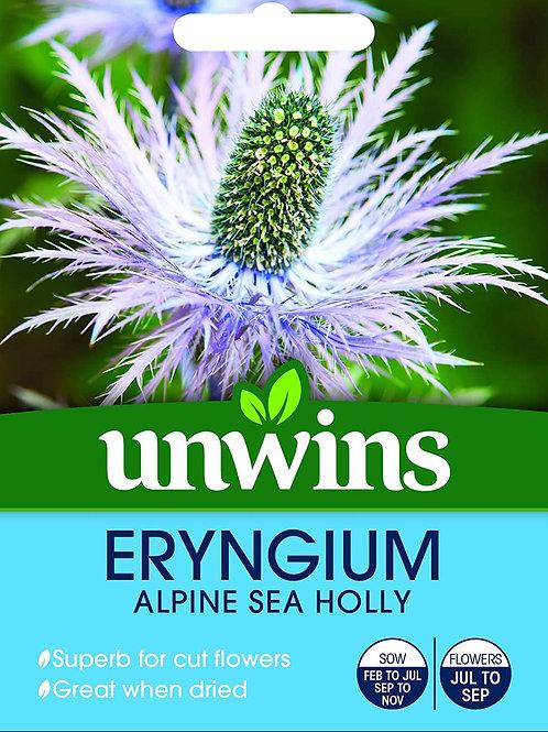 Unwins Eryngium Alpine Sea Holly - Approx 25 Seeds