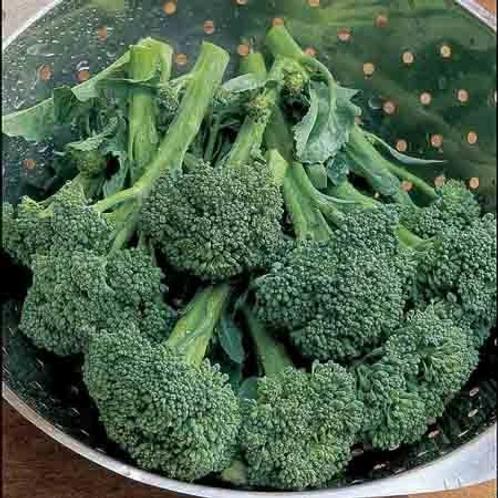 Broccoli Autumn Calabrese (Unwins)