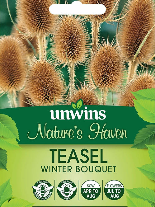 Unwins Nature's Haven Teasel Winter Bouquet - Approx 200 Seeds