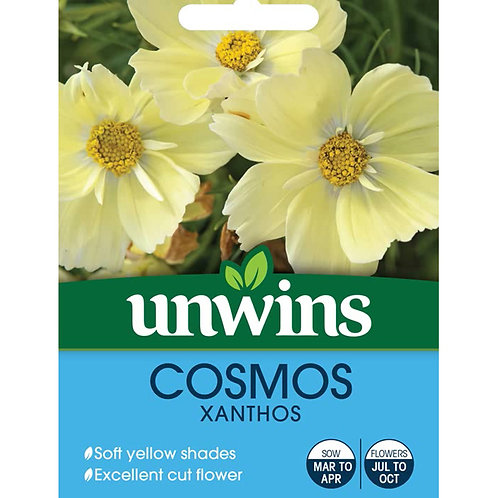 Unwins Cosmos Xanthos - Approx 25 Seeds