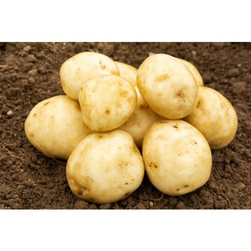 Rocket Seed Potatoes 2kg - First Early
