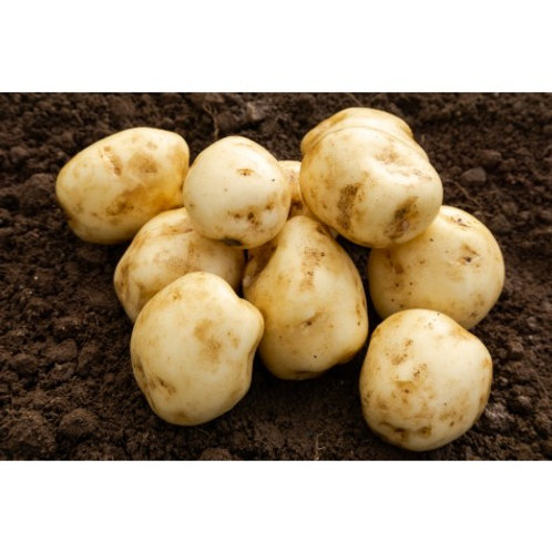 Foremost Seed Potatoes 2kg - First Early