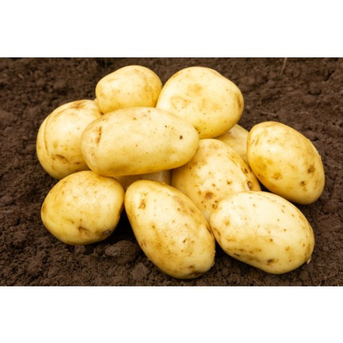 Maris Piper Seed Potatoes 2kg - Maincrop