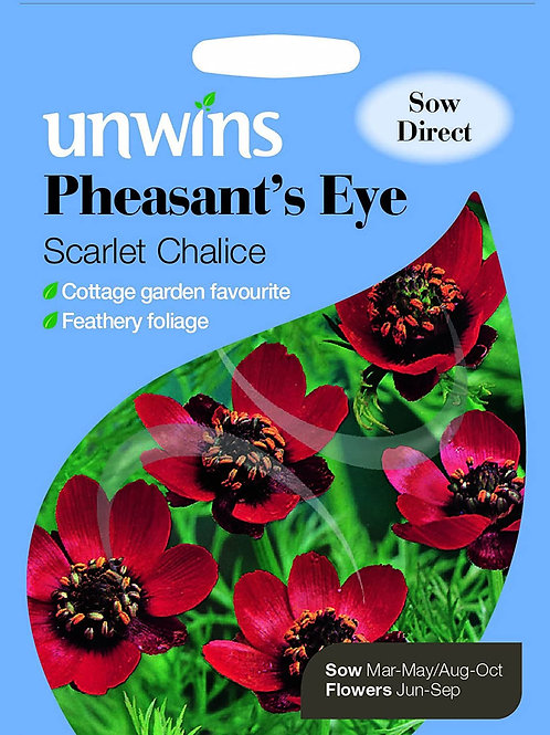 Unwins Pheasant's Eye Scarlet Chalice - Approx 100 Seeds