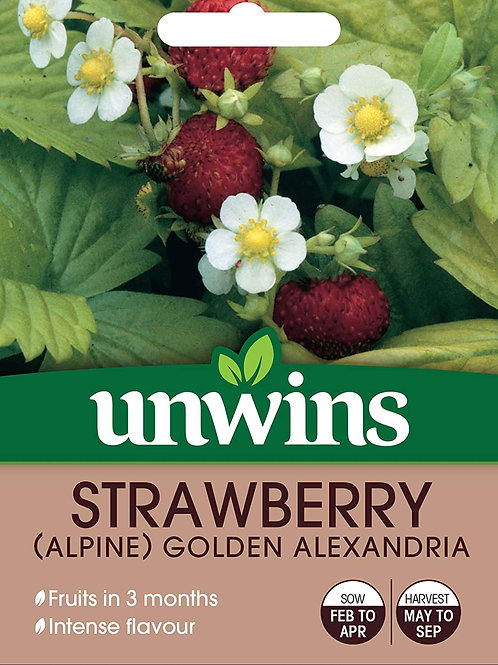 Strawberry (Alpine) Golden Alexandria (Unwins)