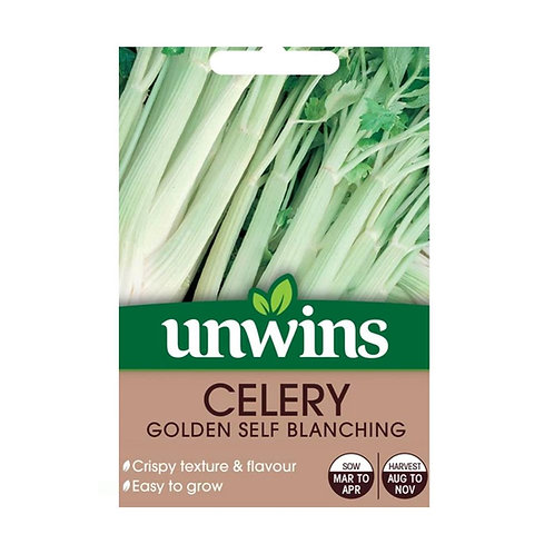 Unwins Celery Golden Self Blanching - Approx 350 Seeds