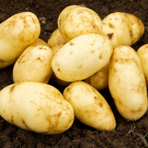 Arran Pilot Seed Potatoes 2kg - First Early