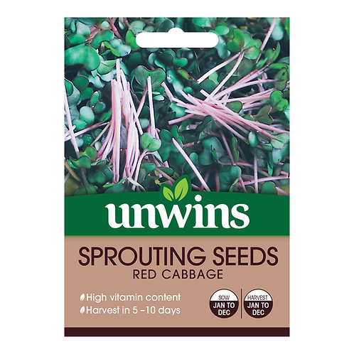 Unwins Sprouting Seeds Red Cabbage - Approx 3000 Seeds