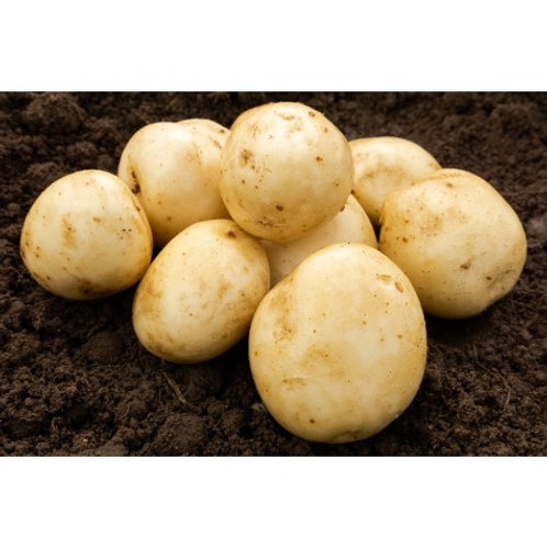 Pentland Javelin Seed Potatoes 2kg - First Early