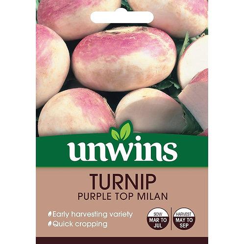 Turnip Purple Top Milan (Unwins)